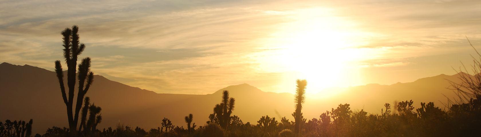 Sunrise in the Mojave